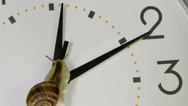 Stock Video Footage of Garden snail on clock face