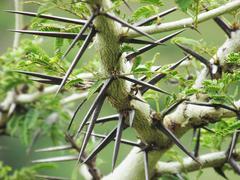 Bokeh thorn plant Stock Photos