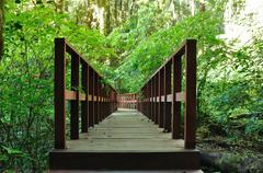 walkway in the forest. - stock photo