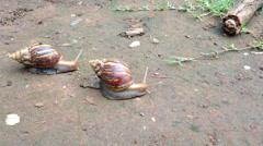 Snail Stock Footage