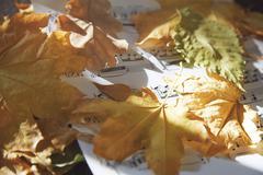 autumn nocturne - stock photo