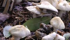 Wild Toadstools Fungi Magic Mushrooms Stock Footage