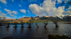 Timelapse Willow Trees At Glenorchy 12fps HD720p Stock Footage