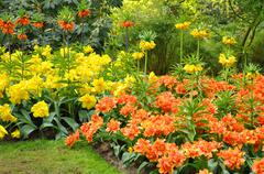 yellow and orange imperial crown fritillaries in keukenhof park in holland - stock photo
