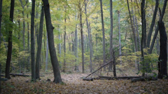Leaves falling in heavily wooded area during autumn Stock Footage