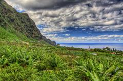 Stock Photo of banana palms plantation in north-west coast of tenerife, canarian islands