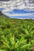 banana palms plantation in north-west coast of tenerife, canarian islands - stock photo