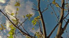 Clouds under sky through tree. 1 minute time lapse shot Stock Footage
