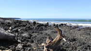 Stock Video Footage of Driftwood on Lava Rock Shore