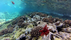 Reef Details - stock footage