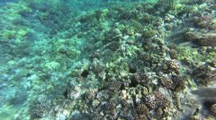 Sparkling Sunlight Dances on Reef Stock Footage