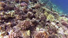 Sun Waves on Molokini Reef Stock Footage