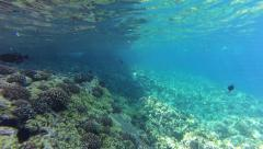 Snorkeler Surfaces from Free Dive in Reef Stock Footage