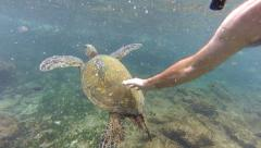 Snorkeler Touches Sea Turtle - stock footage