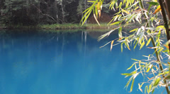 Lake and bamboo Stock Footage