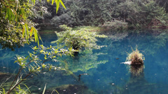 Lake and jungle Stock Footage