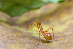 assassin bug - stock photo