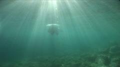 Diver swims on the surface  sunlight illuminate it Stock Footage