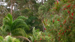Tropical garden in high winds Stock Footage