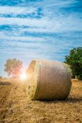 Sheaves of straw, apulia region Stock Photos