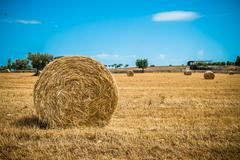 sheaves of straw, apulia region - stock photo