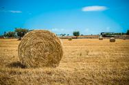Stock Photo of sheaves of straw, apulia region