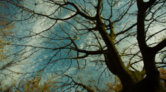 Naked Autumn Tree Stock Footage