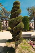 Spiral conifer and palm trees in Cadiz Stock Photos