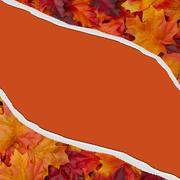 Autumn leaves torn background for your message or invitation Stock Photos
