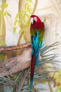 Green-Winged macaw in nature surrounding Stock Photos