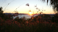 Hamilton Island grasses soak up last rays TL - stock footage