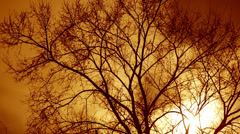 Naked Tree 2 Stock Footage