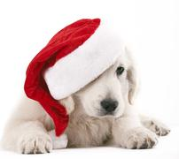 Christams dog Stock Photos