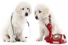 Calling the vet Stock Photos