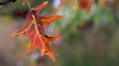 Autumn Leaf Loop Stock Footage