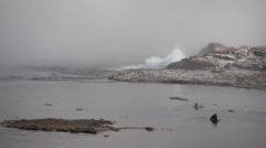 Steady Geyser in Yellowstone National Park Stock Footage