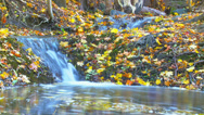 Stock Video Footage of Colorful leafs next to a waterfall during autumn - Time-lapse