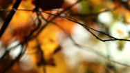 Stock Video Footage of fall, autumn, leaf, leaves, foliage, Seattle