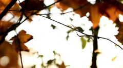 fall, autumn, leaf, leaves, foliage - stock footage