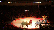 Stock Video Footage of performance in a big beautiful circus with camels 3