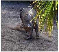 Rhino Charge Stock Photos