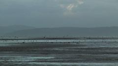 Wader birds on mud estuary Stock Footage