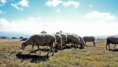 Counting sheep - stock video Stock Footage