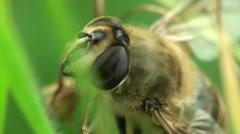 Macro bee Stock Footage