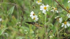Monarch Butterfly In Field of Flowers Stock Footage