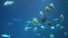 beautiful fish underwater - stock footage