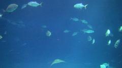 Beautiful fish underwater Stock Footage