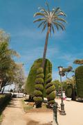 Palm trees and conifers in Cadiz - stock photo