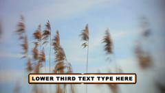 Line Simple Lower Third Stock After Effects