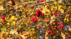 autumn - stock footage